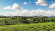 Beautiful tea plantation video