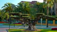 Beautiful tree and palm trees, Salou, Costa Daurada in Catalonia, Spain video