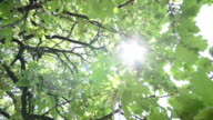 HD CRANE: Beautiful tree top sun rays shines through branches video