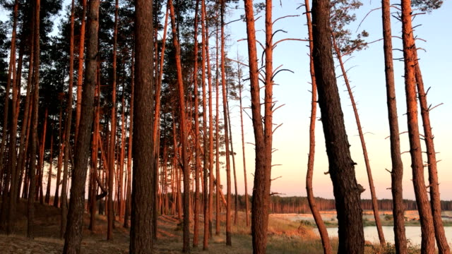 beautiful trees against the sky in the evening and sunset video