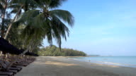 Beautiful tropical beach and sea with coconut palm tree video