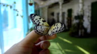 Beautiful tropical butterflies takes off from the hand or finger. Slow mo, slo mo video