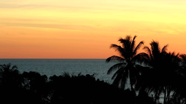 Beautiful tropical orange sunset with sea and palm trees video