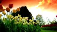Beautiful Tulip Garden Near Lake Geneva video