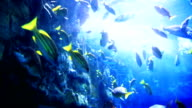 beautiful underwater scene with fishes and light rayes video