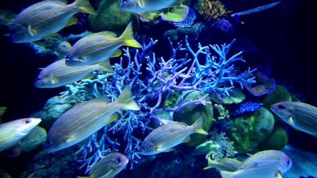 Beautiful underwater world video