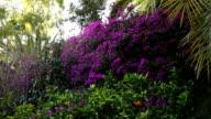 Beautiful vegetation in Alcazaba gardens video