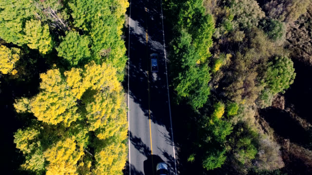 Beautiful vertical look down drone shot following a car on a lonesome road in the California mountains as the trees are changing colors. video