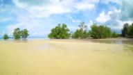 Beautiful view mangroves forest beach video