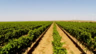 Beautiful vineyards landscape with wind turbines in the background video