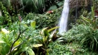 Beautiful Waterfall in Rain Forest video