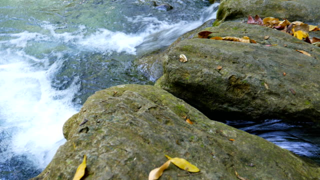 Beautiful Waterfall with Green Forest video