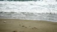 beautiful waves in beach 4k video