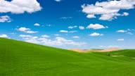 Beautiful Wheat Field in spring video