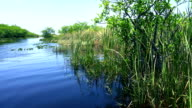 Beautiful wildlife in nature of the Everglades in Florida video