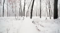 Beautiful winter scene camera moving over fallen tree towards winter wonderland video