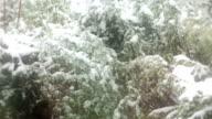 Beautiful winter's idyll video