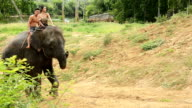 Beautiful woman and man wear traditionnel thai dress ride on beautiful elephant video