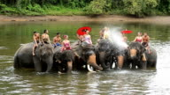 Beautiful women and men wear traditionnel thai dress riding on beautiful elephants in the river video