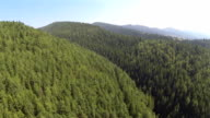 beautiful wood in mountains. Flight in summer day video