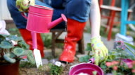 Beautiful young woman gardening in the spring time video