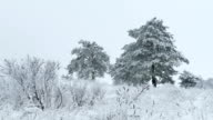 beauty fir in snow tree wild winter forest Christmas snowing video