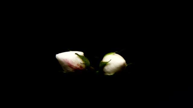 beauty flower video