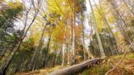 Beauty in nature during autumn season. video