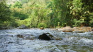 Beauty of flowing river and nature video