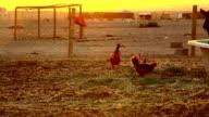 Bedouins video