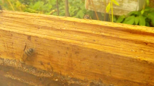Bee Climbs on Wall of Hive Smoke Some Bees Behind Close up video