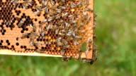 Bee frames video