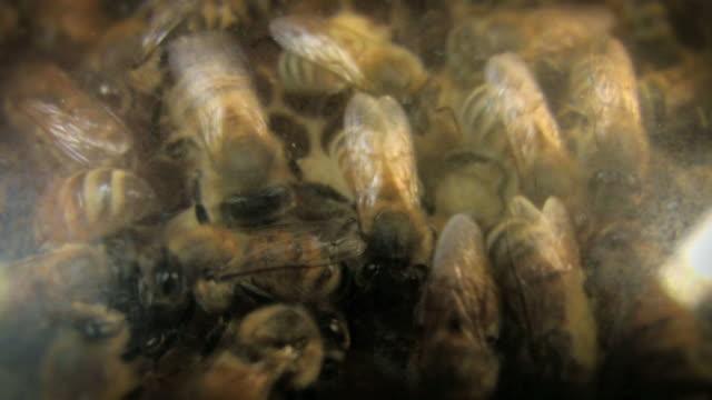 Bee Hive (HD) video