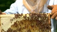 Bee Hive video