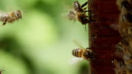 Bee hive video