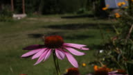 Bee in the work on a flower video