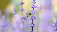 Bee Insect video