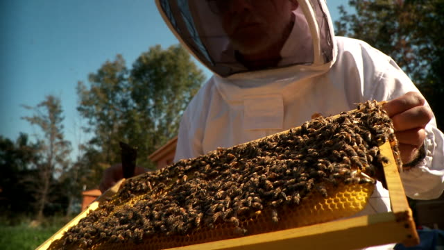 Bee Keeper and Colony CU video