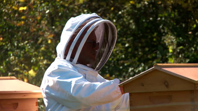 Bee Keeper inspecting a colony video