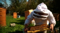 Bee Keeper with colony video