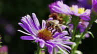 SLOW MOTION: Bee on Flower video