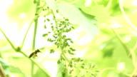bee on grape video