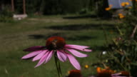 Bee on the flower video