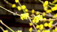 bee on the yellow flowers video