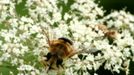 Bee pollinating flower video
