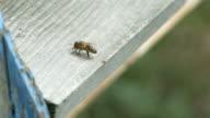 Bee Resting video