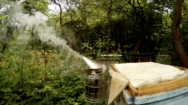Bee Smoker Fumes in Front of Camera Bees Fly Some Hives in Forest video