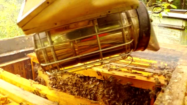 Bee Smoker Fumes in Hive With Bees And Frames Detail video