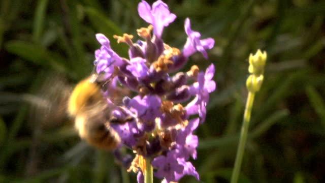 Bee video