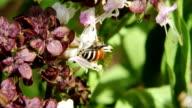 Bee Woking video